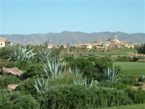 Image of the grounds at Desert Springs Golf Resort