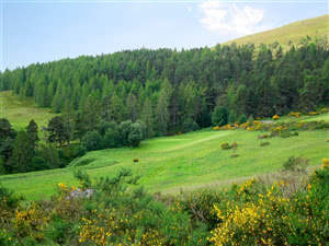 Image of the grounds at Dufftown Golf Club
