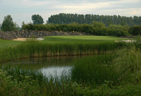 Image of the grounds at Chichester Golf Club